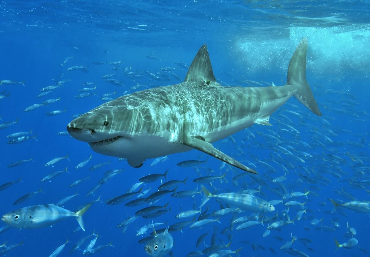 A fehér cápák kedvelt kávézója is világörökségi helyszín lehet