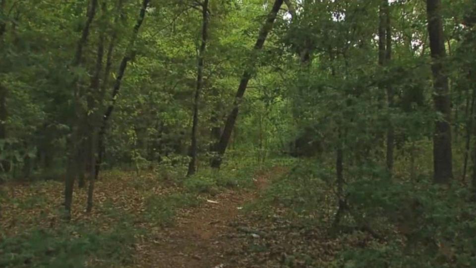 Az ipari célú erdőtelepítések is bekerülnek az erdőtörvény módosításába