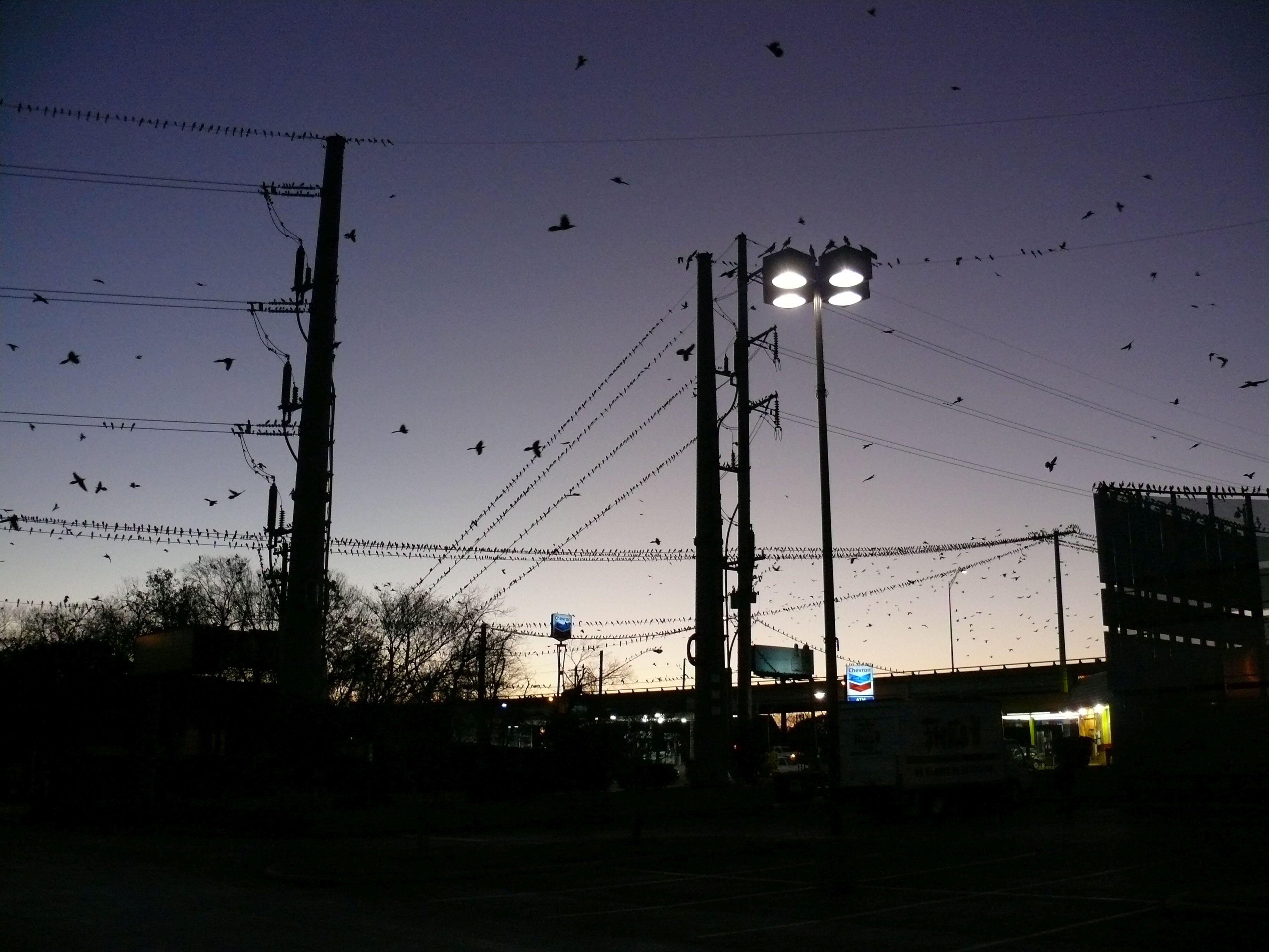 Rigók záporoznak az égből Bostonban