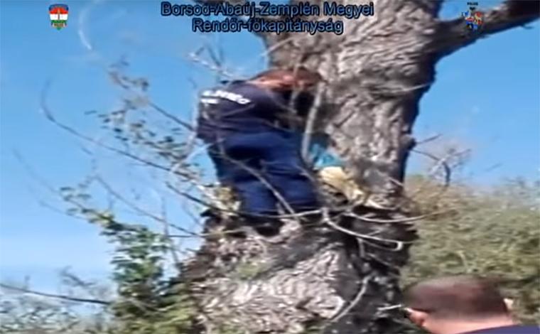 Rendőrök hozták le Bőcsön a fáról a fiút, aki megijedt egy vaddisznótól, aztán úgy maradt
