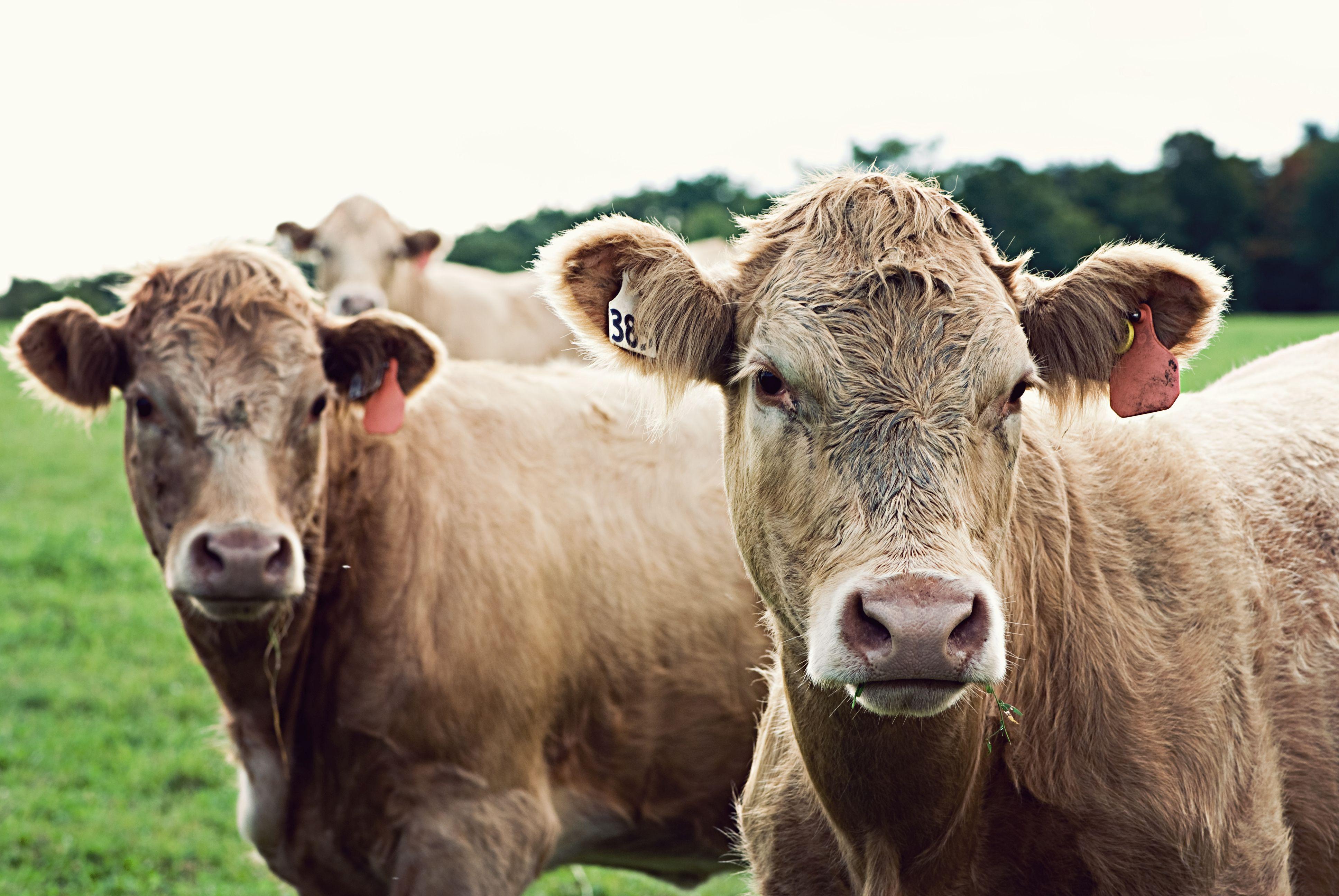 A húsipari termékek árának emelését sürgetik német állatvédők, a Bundestag több pártja is nyitott a javaslatra