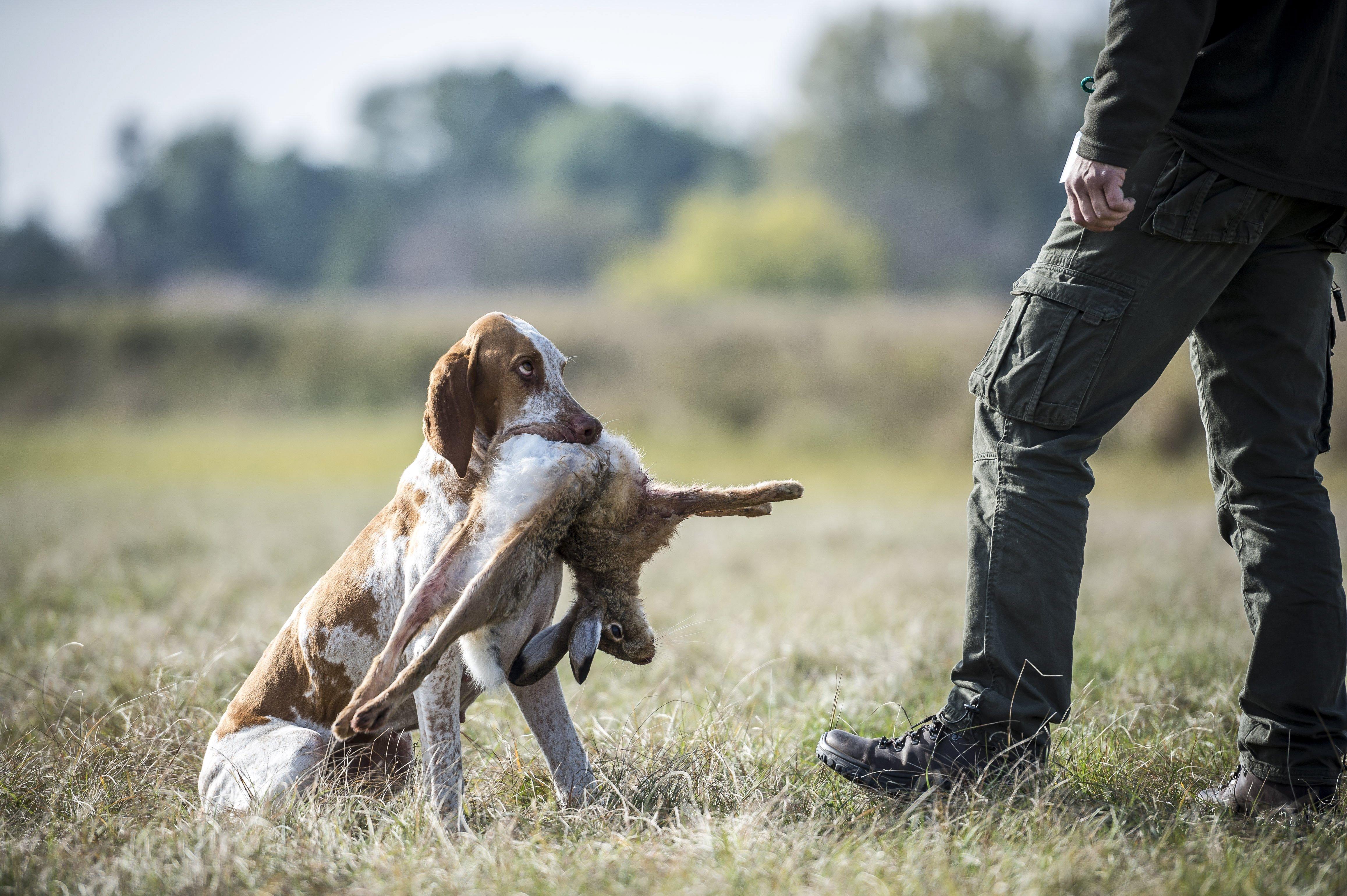 Már kormánybiztosa ÉS miniszteri biztosa IS van a 2021-es vadászati világkiállításnak - EZ TÉVEDÉS