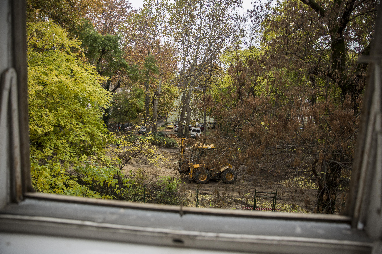 A depressziót is csökkenti, ha fákat ültetnek az üresen álló városi telkekre