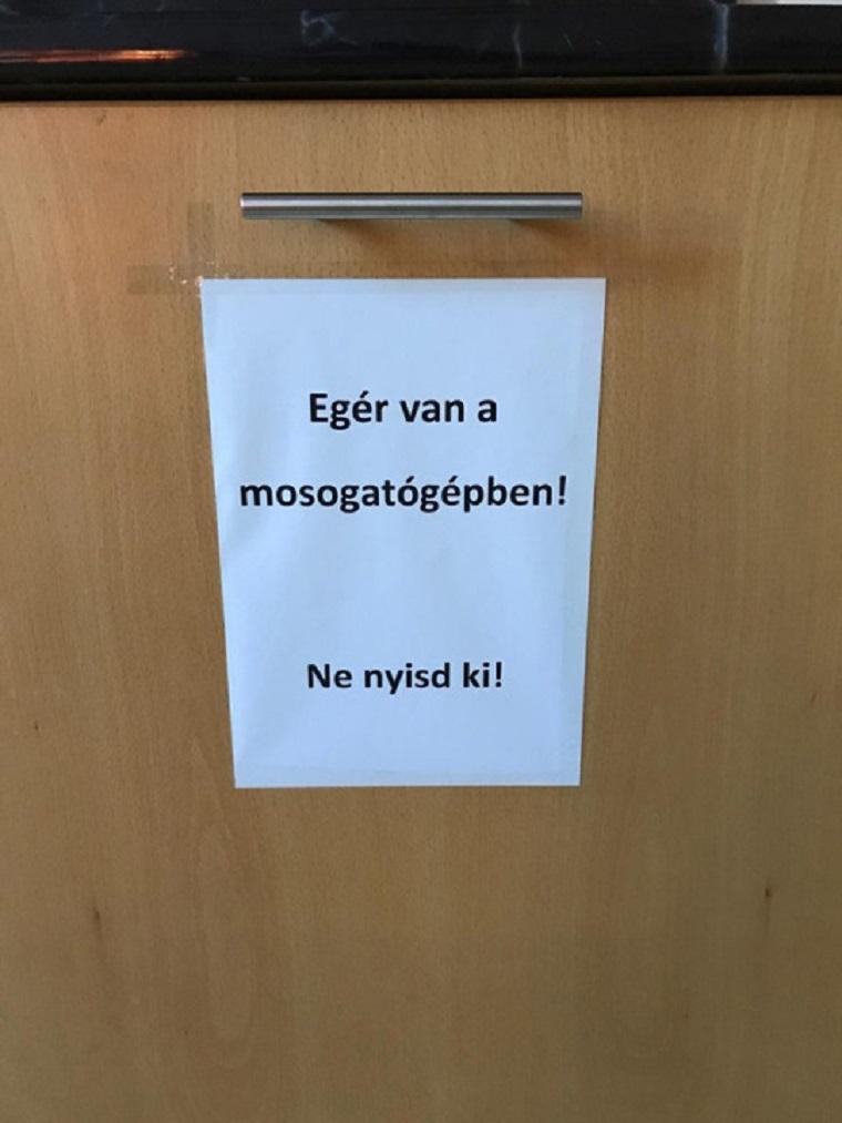 Egér bújt a mosogatógépbe egy magyar irodában. Te hogyan oldanád meg a helyzetet?