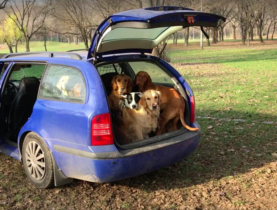 Vajon hány aranyos, jól nevelt kutya fér el egy autó csomagtartójában?