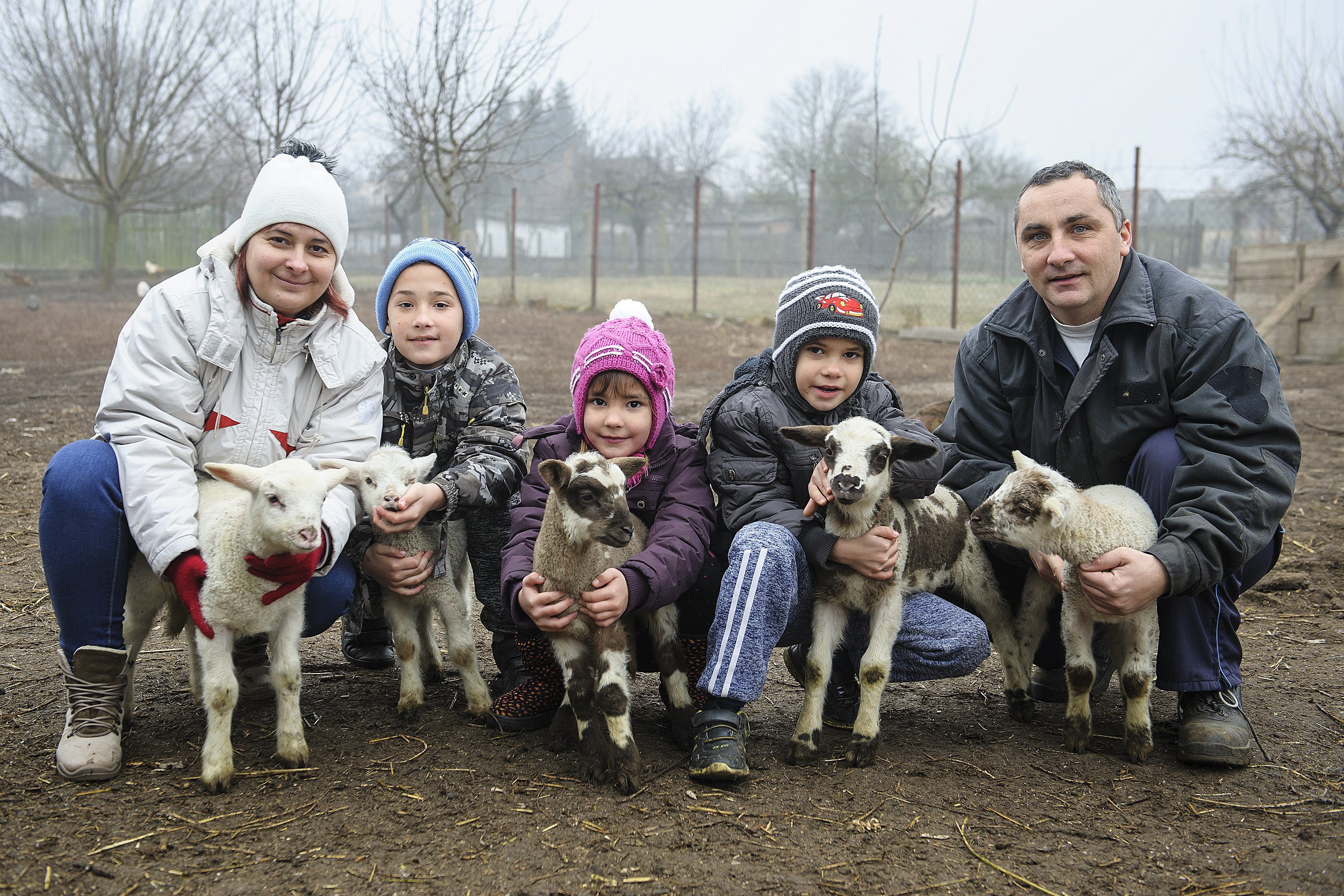 Ötösikrek kisbárányok születtek Hajdúnánáson