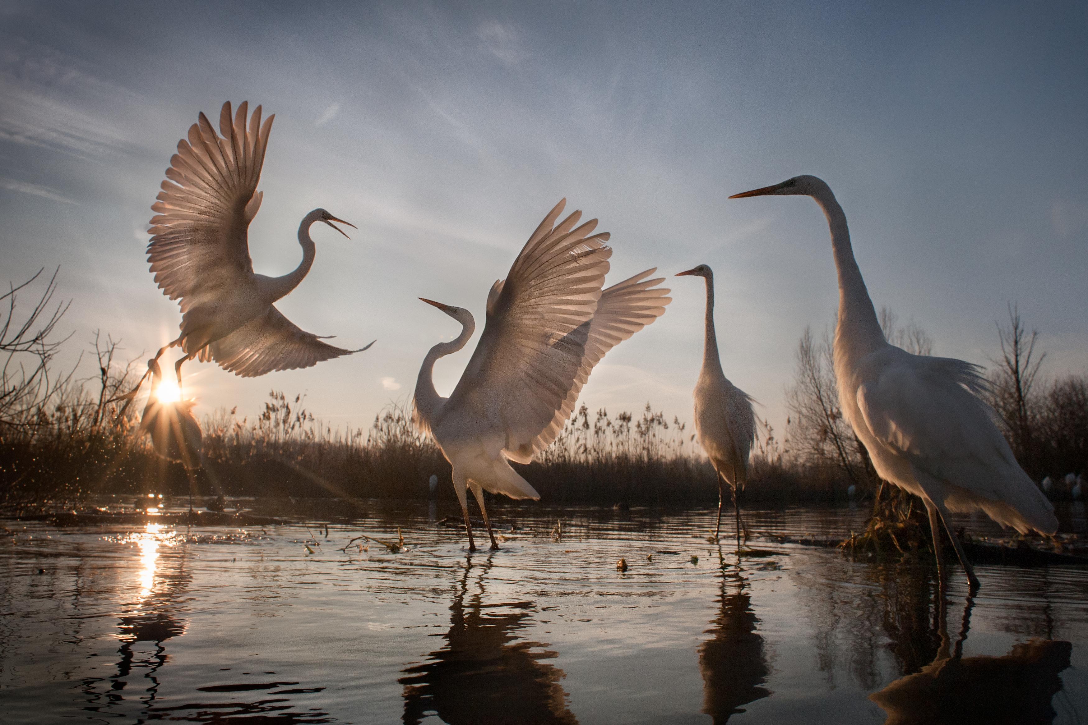 Díjat nyert egy magyar természetfotós a National Geographic fotópályázatán