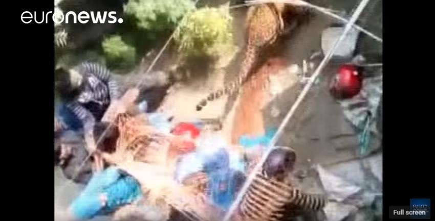 A trükkös indiaiak kézzel próbálták elkapni a hálóba akadt leopárdot