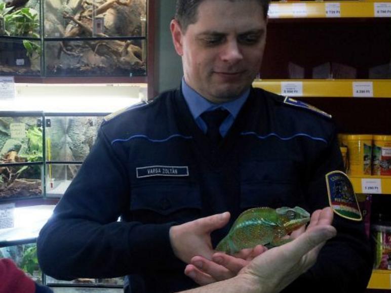 Elkapták a kaméleontolvajt