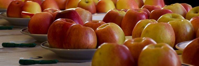 Még a legpesszimistább várakozásokat is alulmúlja az almatermés