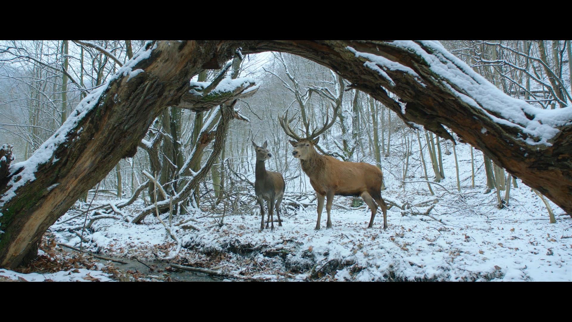 Enyedi Ildikó filmje akár díjat is nyerhet a Berlinalén