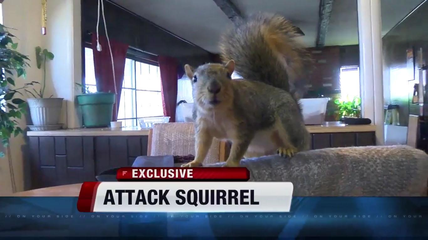 Joey, a hős házőrző mókus visszatért a vadonba