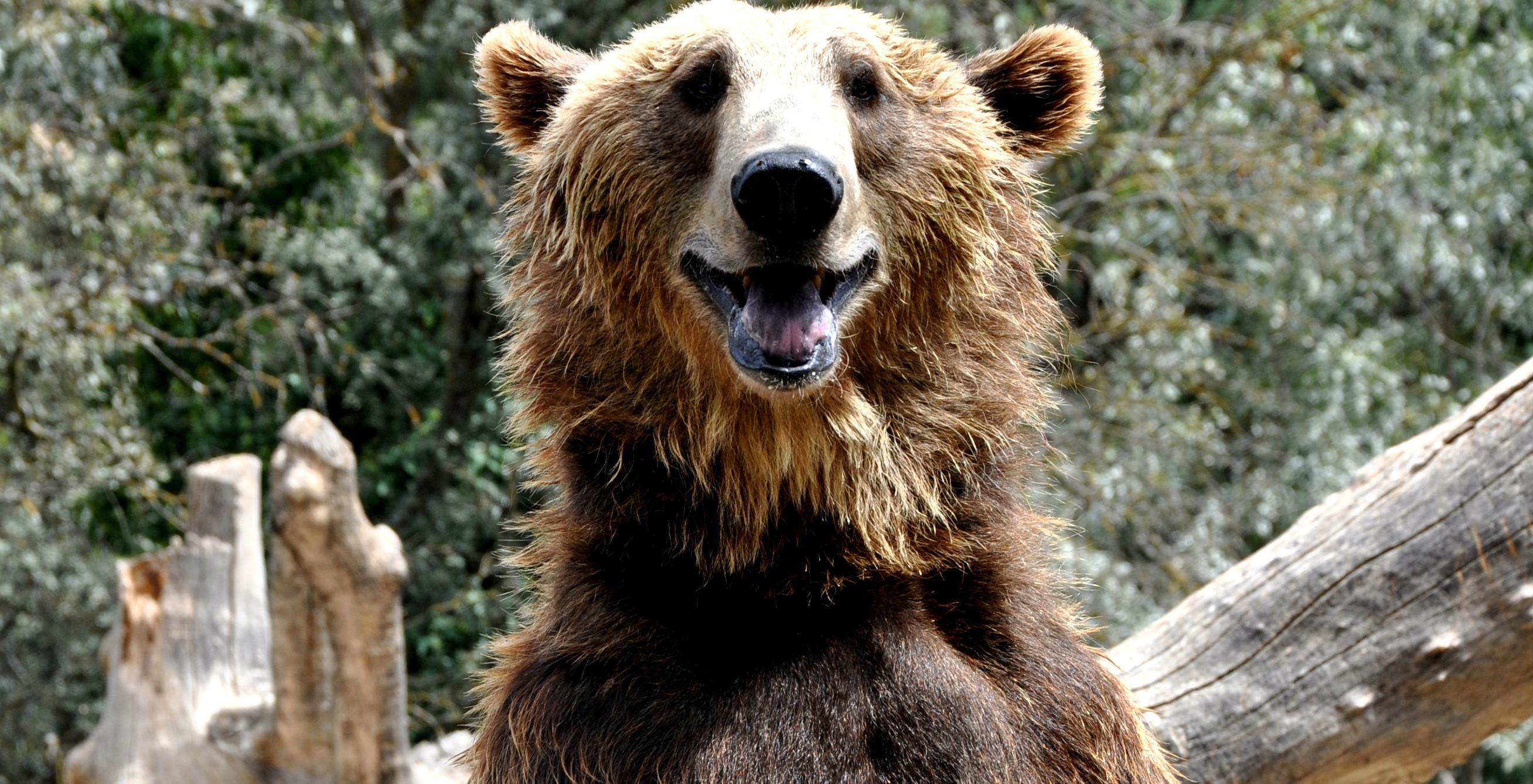 Az orosz medvének tesz hűségesküt egy publicisztikában a Nemzeti Sport gyerekveréspárti publicistája