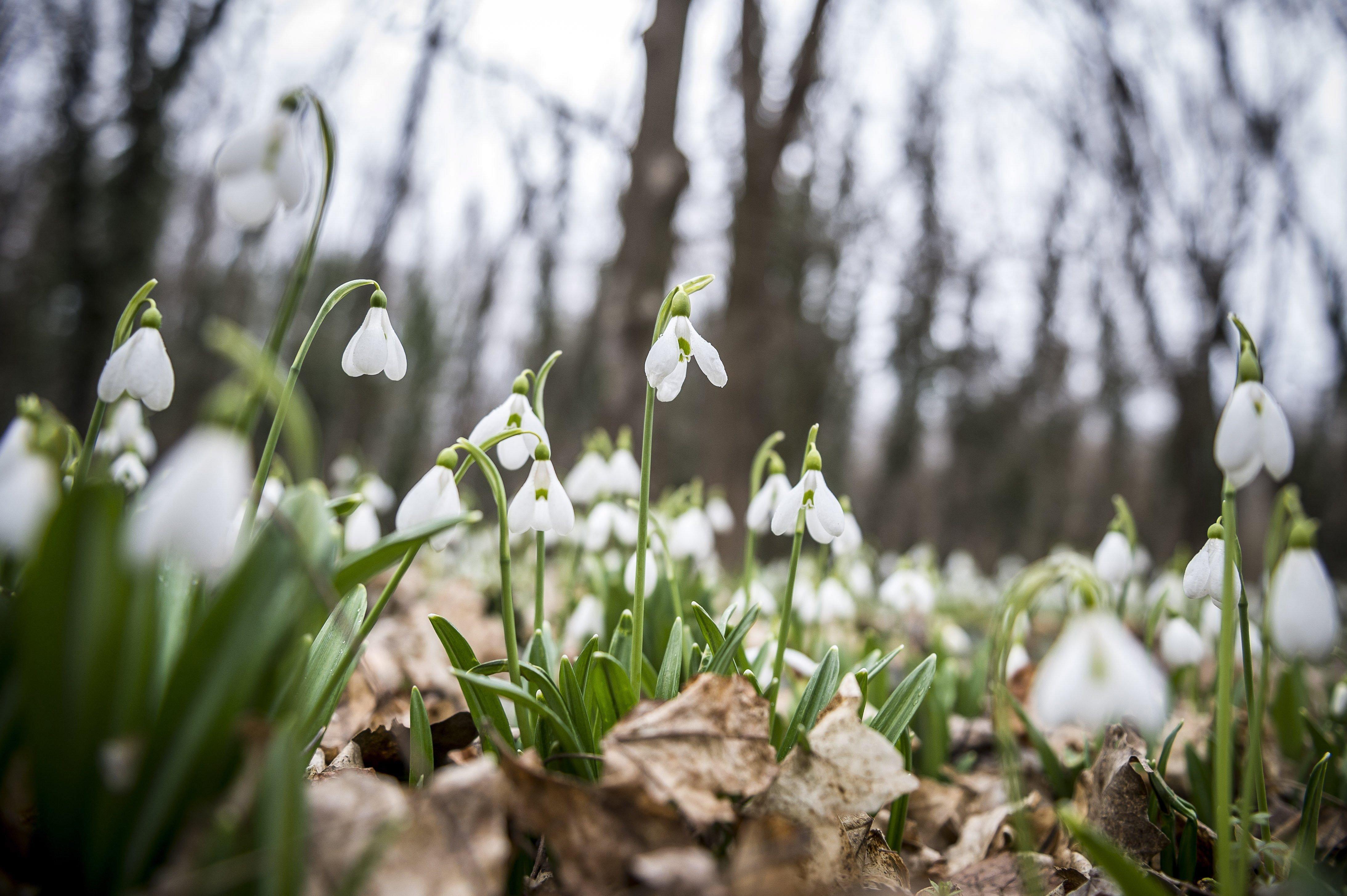 Jön a tavasz, jövő héten akár 16 fok is lehet