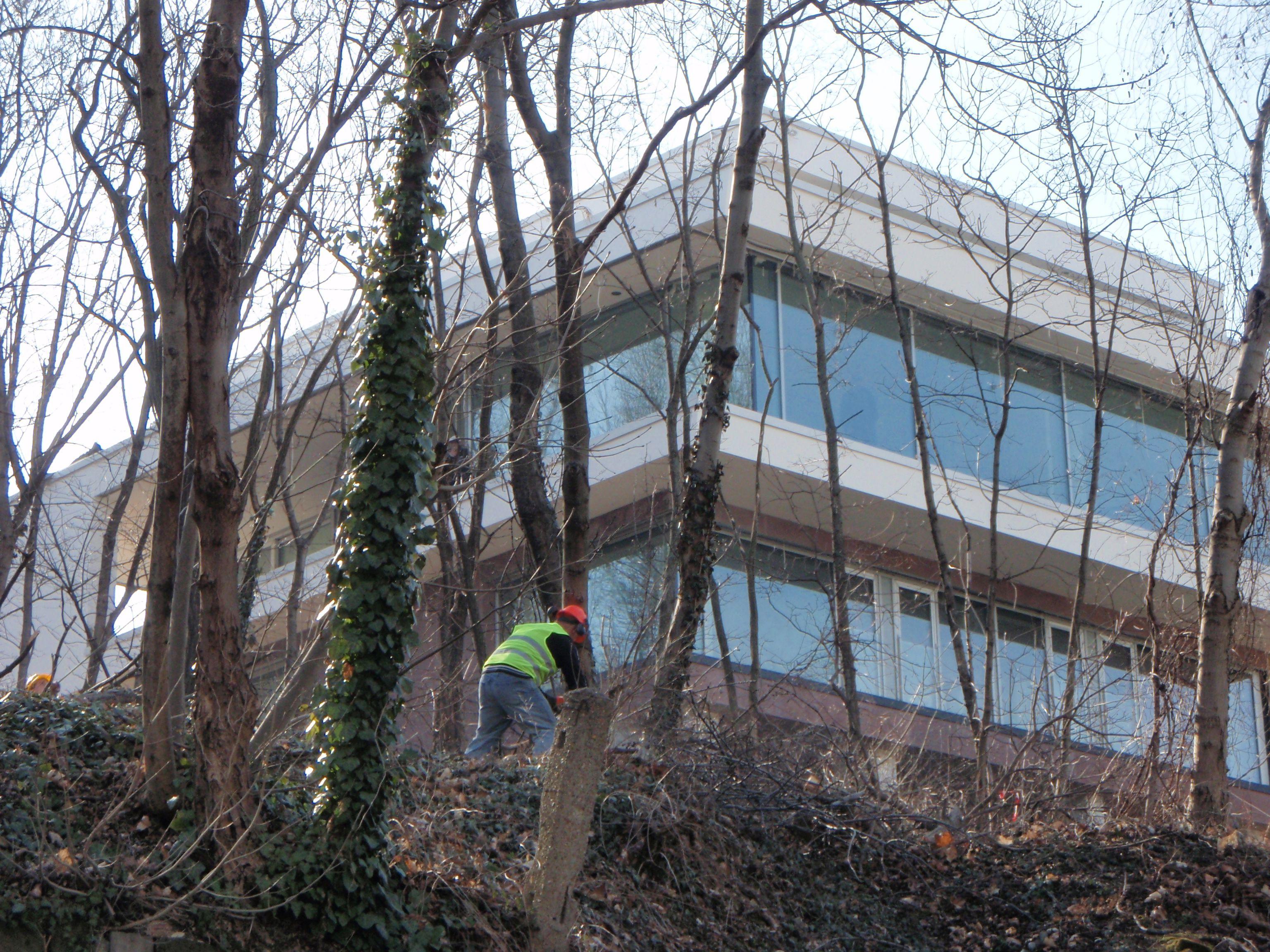 Már a szomszéd telek fáit sem kíméli Szíjj László villaépítése a Gellért-hegyen