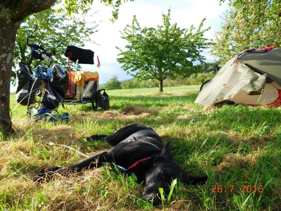 Vádat emeltek a francia turisták kutyáját agyonlövő, majd összevissza hazudozó vadász ellen