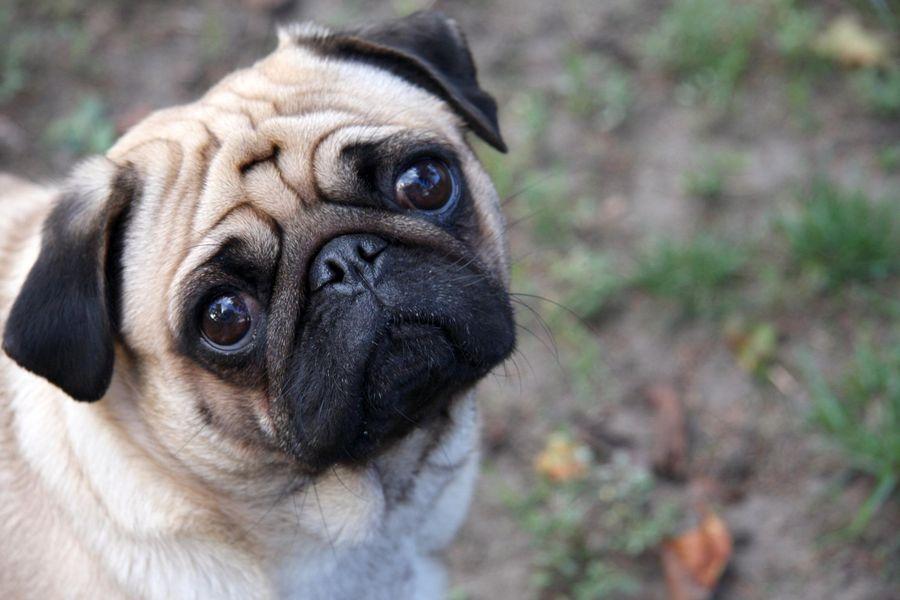 Az idegeskedőket gyakrabban harapják meg a kutyák