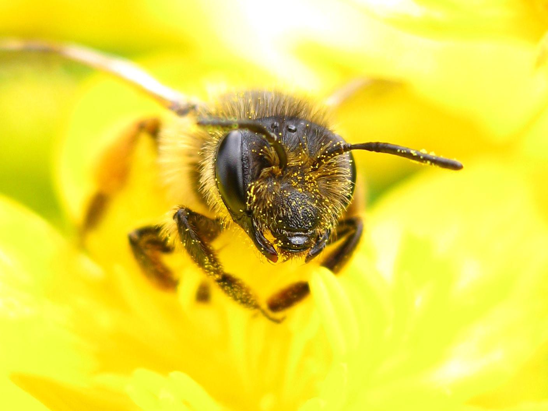 Csinosabb mezőkkel a méhekért!