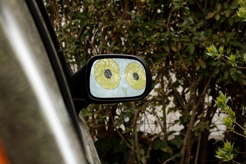 Itt a költési szezon, a madarak megint elkezdik majd támadni az ablakokat és visszapillantókat