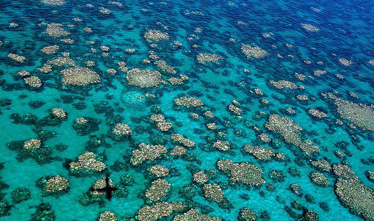 Óriási tengeri csigákkal óvnák a Nagy-korallzátonyt a pusztulástól