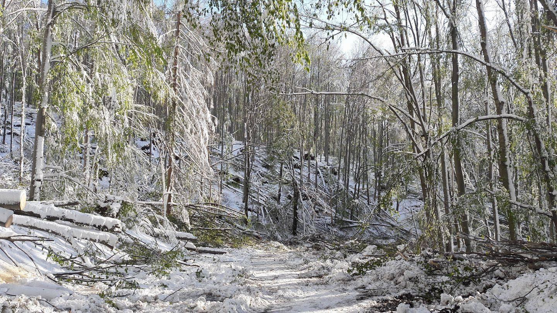 Félmilliárdos kárt okozott a Bükkben és a Zempléni-hegységben az áprilisi hó és vihar