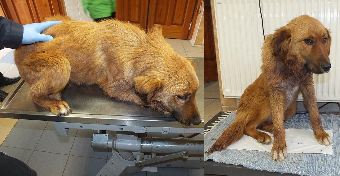 Megmentették a megkéselt kutya életét