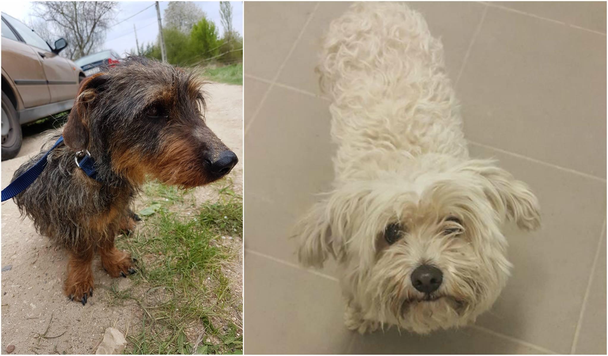 Úgy támadták le rendőrökkel a piliscsabai kutyaotthont, hogy a helyszíni szemle korábban mindent rendben talált