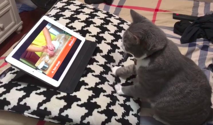 Videó alapján tanul dagasztani a macska