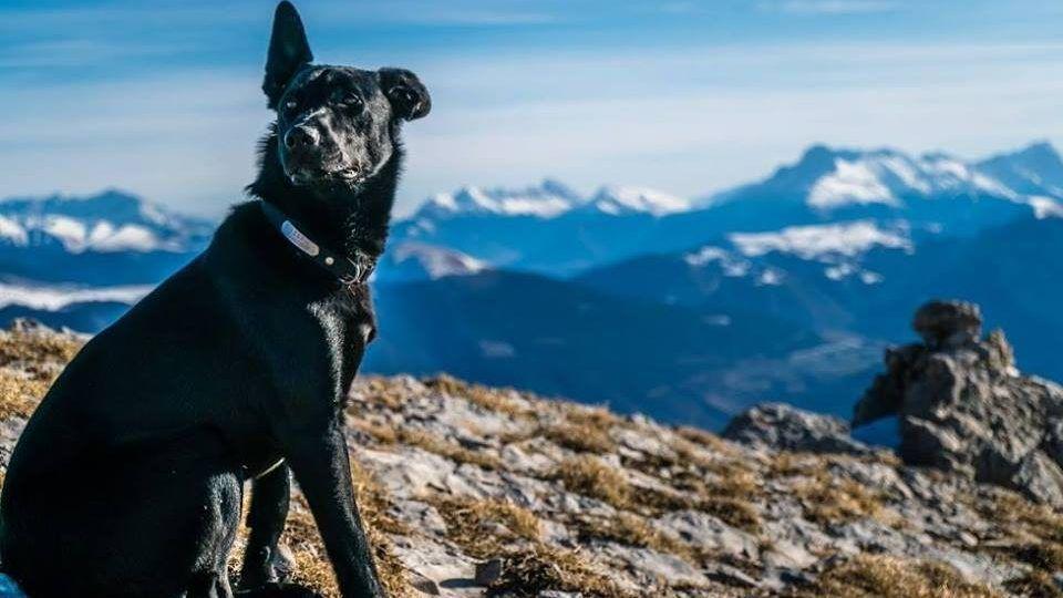 Tényleg a kutyagyilkos magyar vadász szemébe nézhet a lelőtt francia kutya gazdája