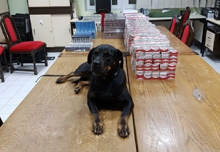 Boo, a NAV frissen képzett szolgálati kutyája büszkén fekszik zsákmánya mellett