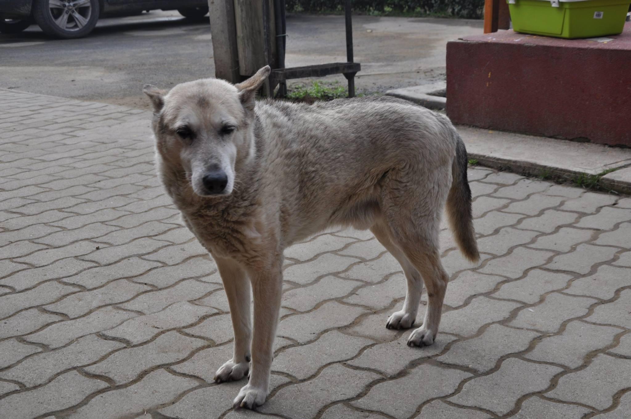 5 év alatt megduplázódott a kóbor kutyák száma Olaszországban