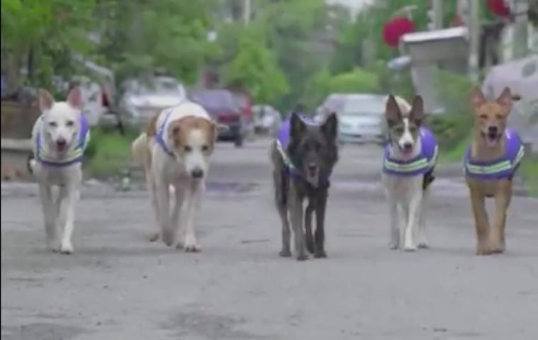A kóbor kutyákból akarnak polgárőrt csinálni Bangkokban
