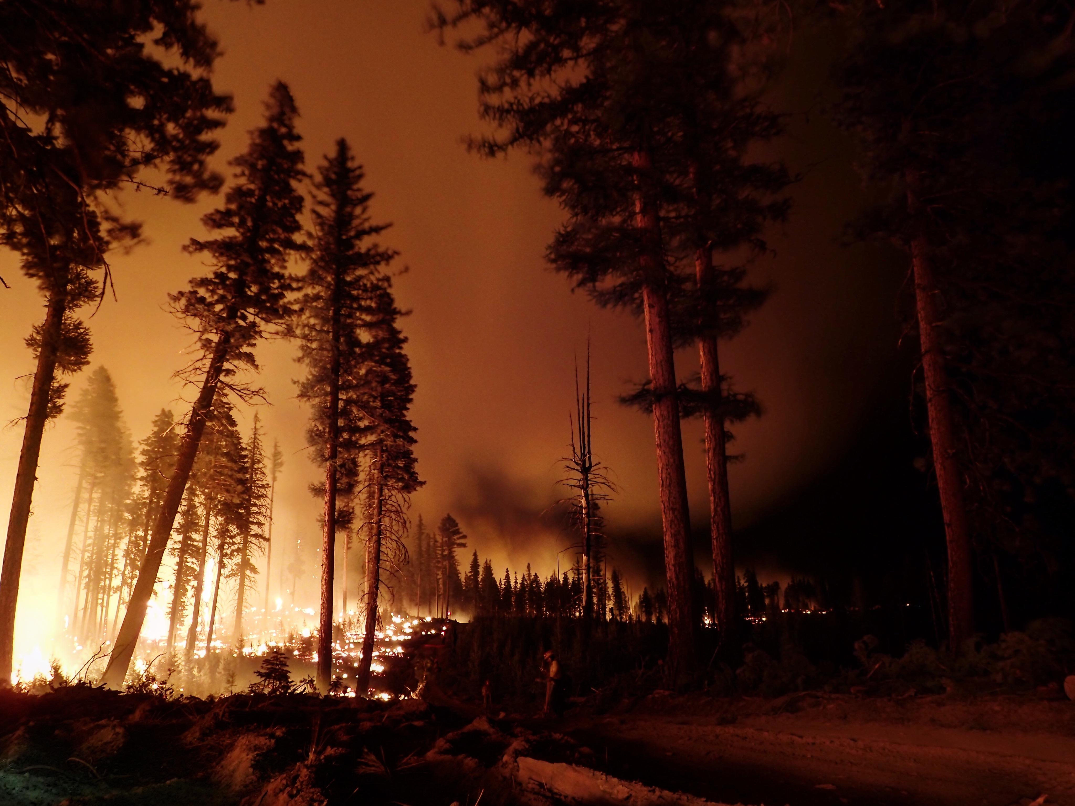 Egy 15 éves fiú okozta az oregoni erdőtüzet