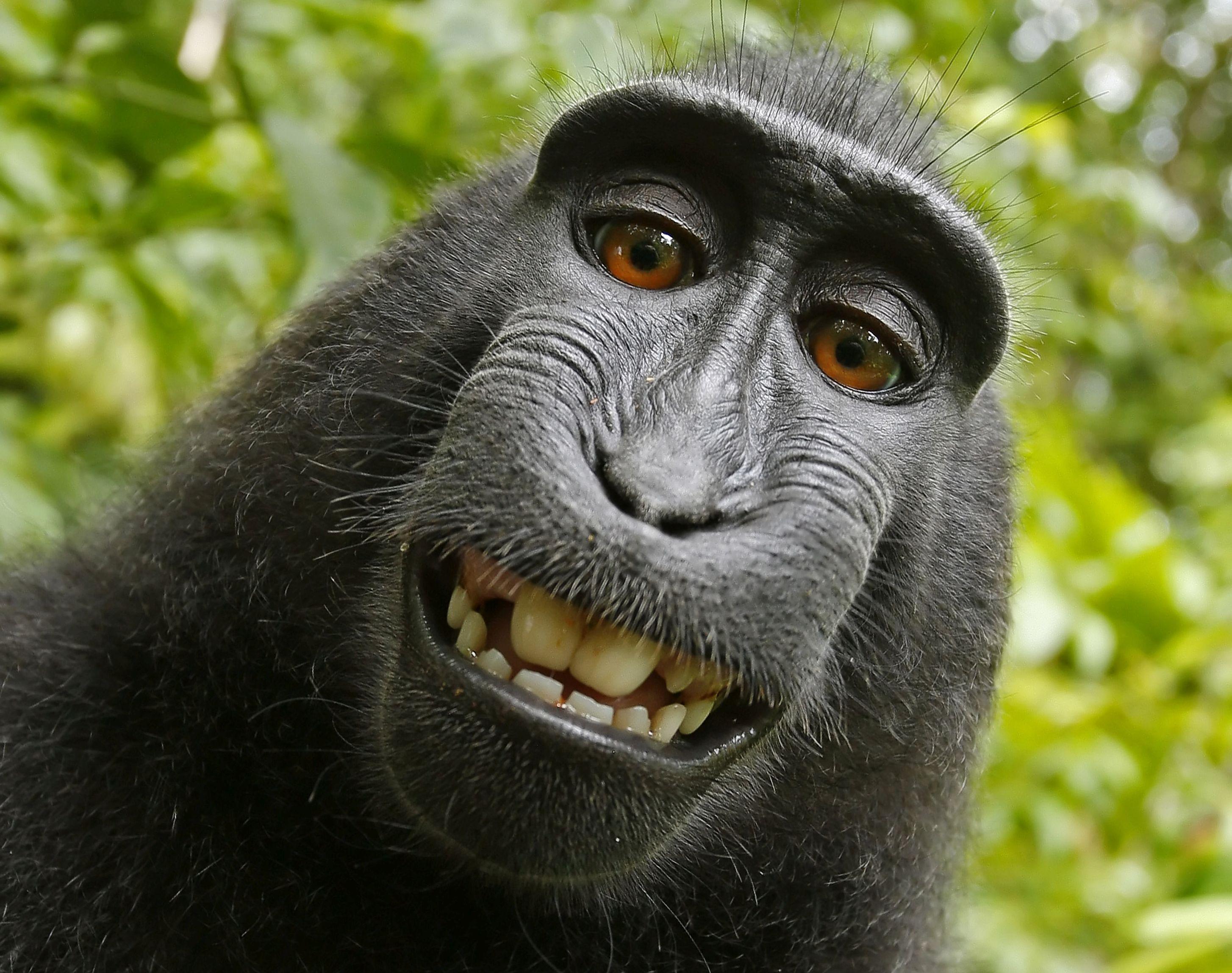 Hatalmas csavar a 21. század majomperében