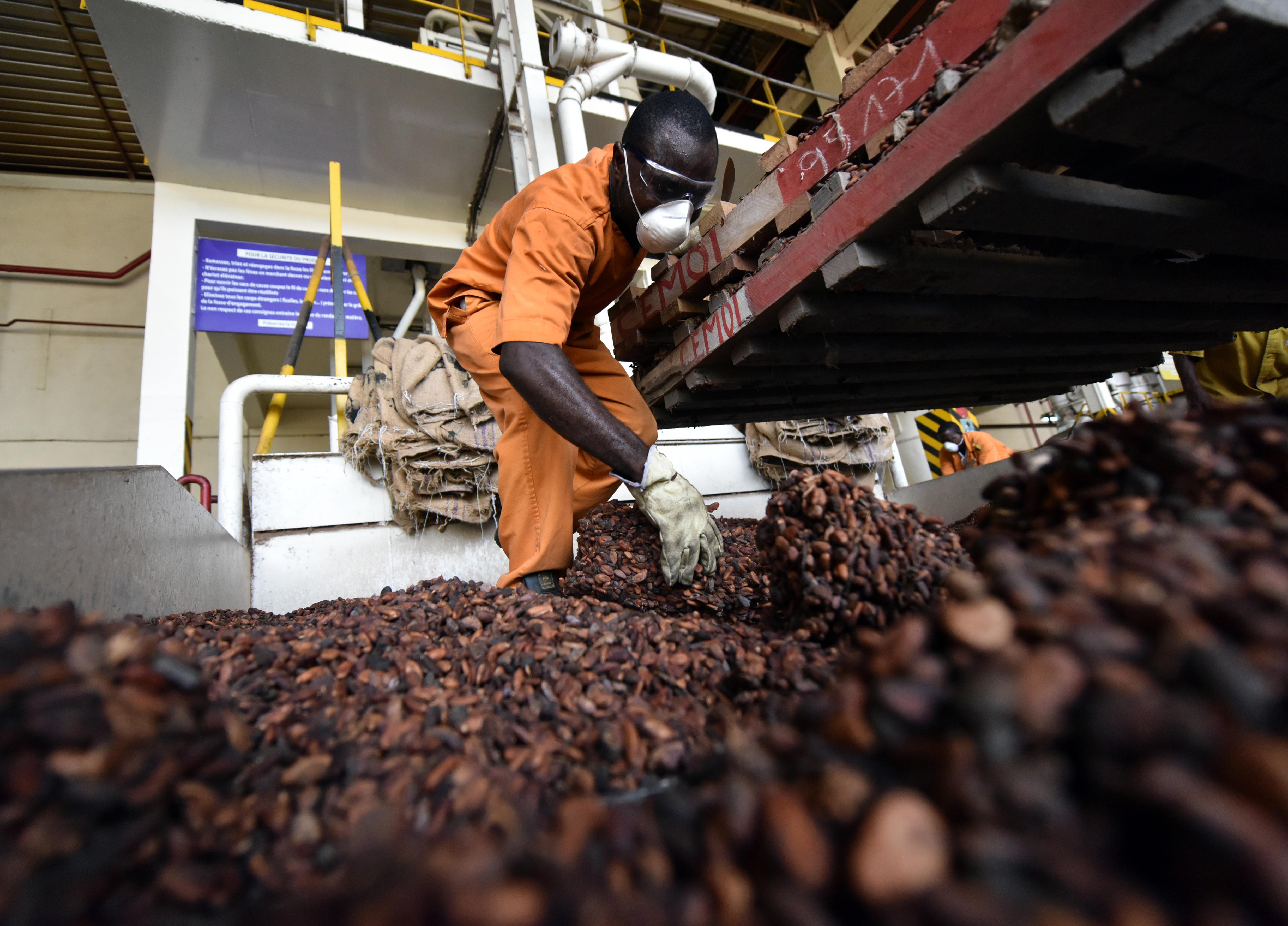 A csokoládéipar is felelős az esőerdők eltűnéséért Afrikában