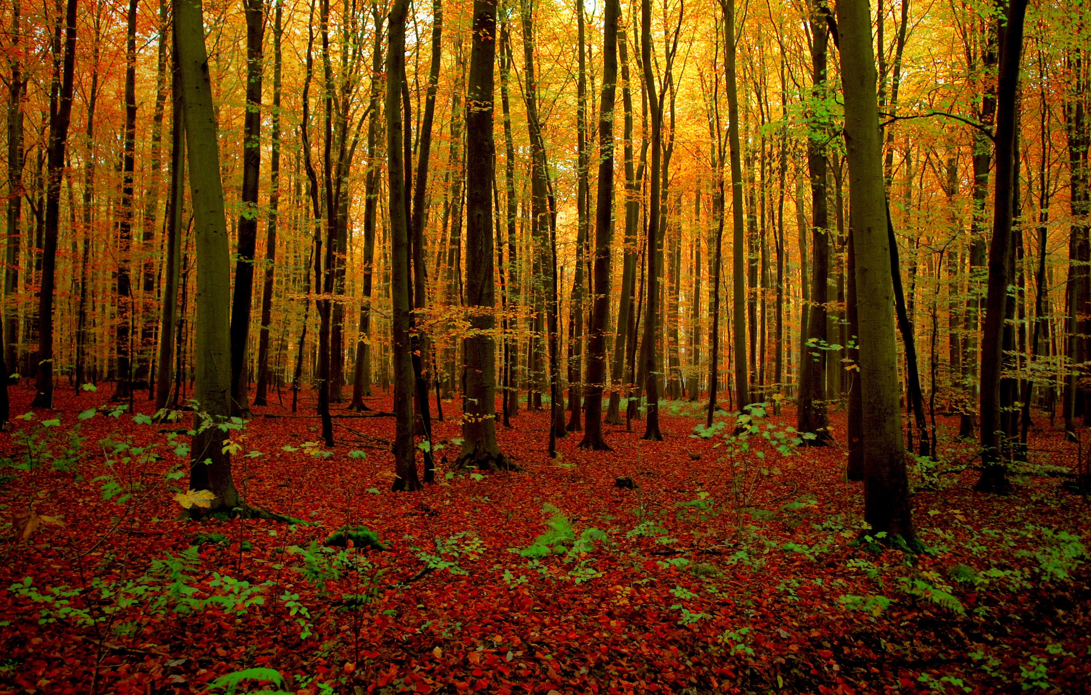 Elszállított három kidőlt fát a telkéről, negyedmillió forintra bírságolták