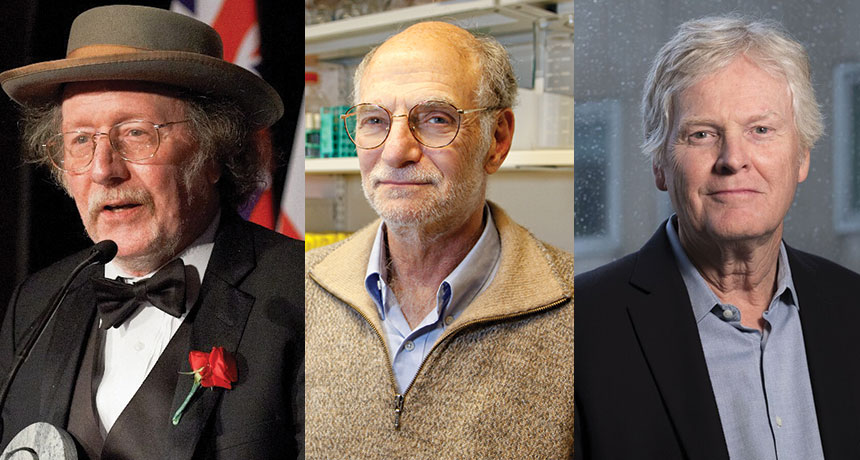 Az élet ritmusai  - fiziológiai és orvostudományi Nobel-díj 2017