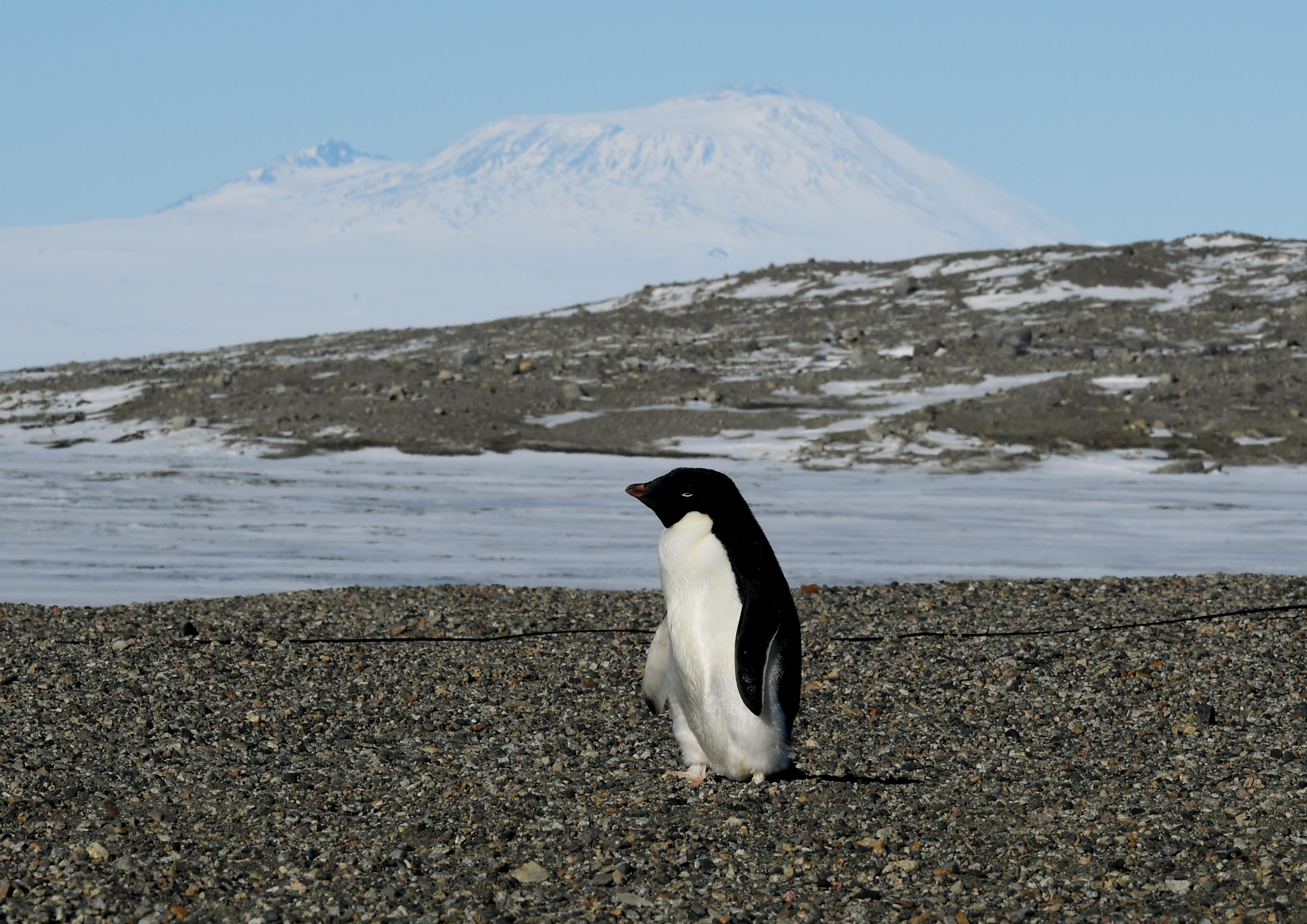 Több ezer pingvinfióka pusztult el az Antarktiszon