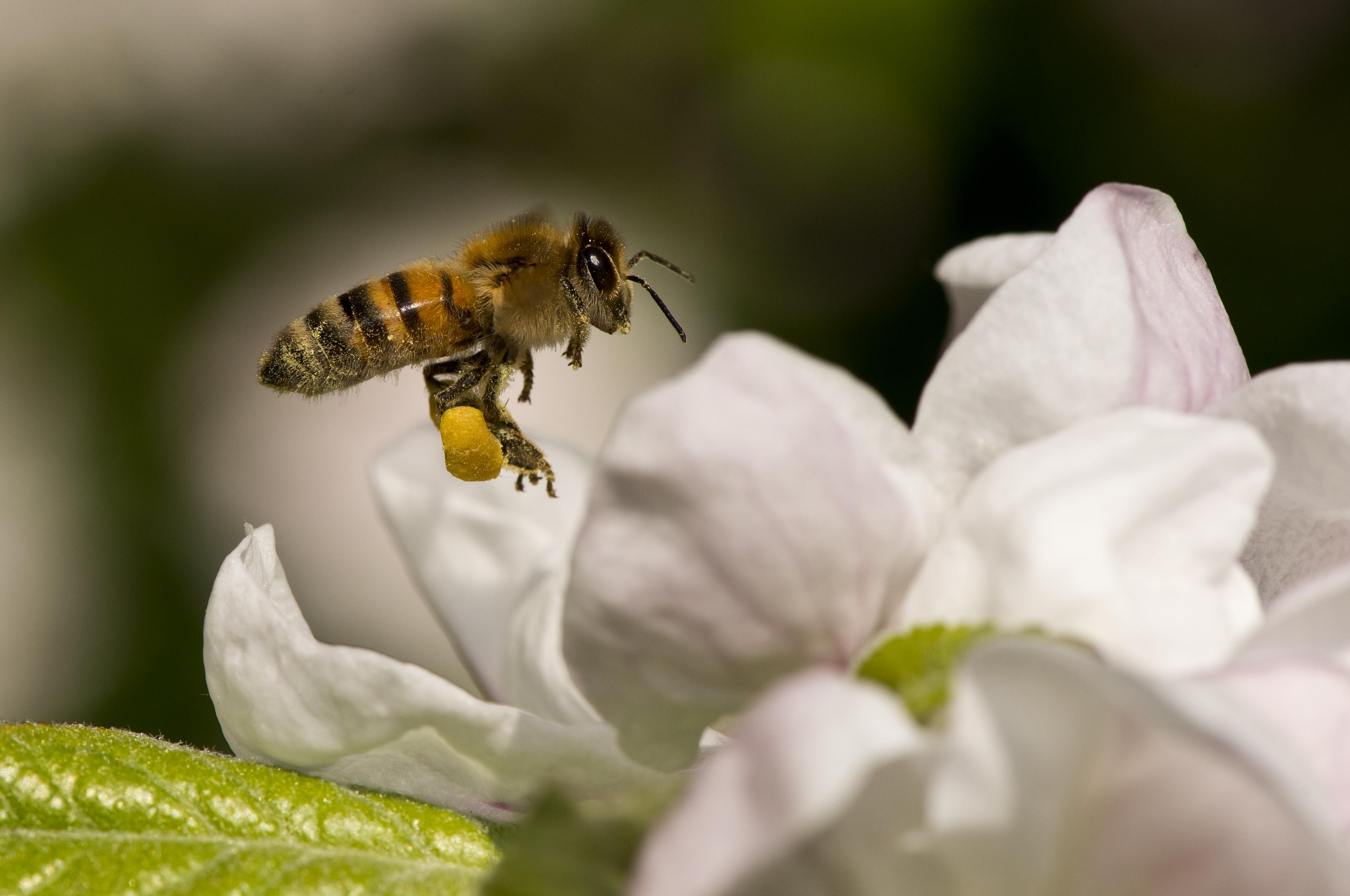 Ökológiai Armageddontól tartanak a repülő rovarok számának drámai visszaesése miatt