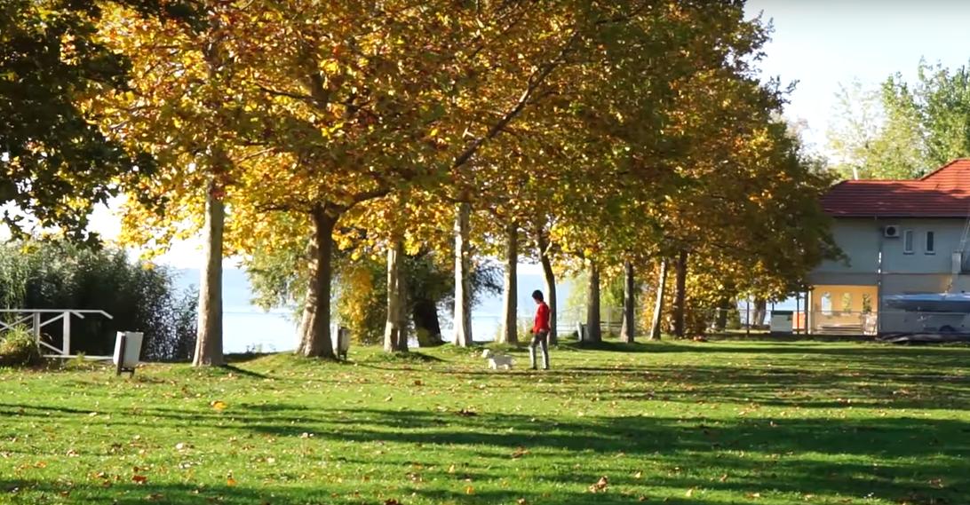 Balatonföldváron eddig szabadstrandként használtak egy tóparti területet, de a polgármester szerint nem az, ezért parkolót épít oda