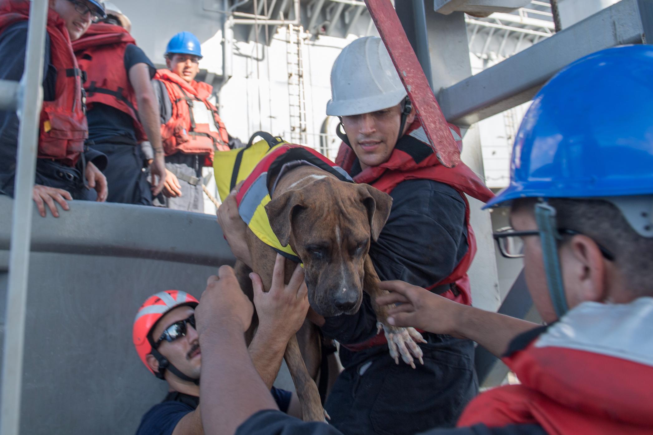 Öt hónap után mentettek meg két, a tengeren hánykolódó nőt és kutyáikat