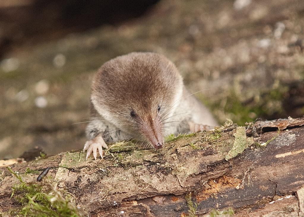 Dorseti sziklák közt bukkantak rá a legősibb emlős maradványaira