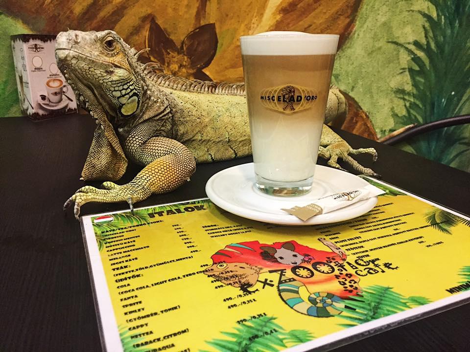 Ideiglenesen bezár az egzotikus állatos kávézó, ahol csótányok, bőrbeteg leguán, fagyasztott egerek és véreset pisilő kenguru is volt