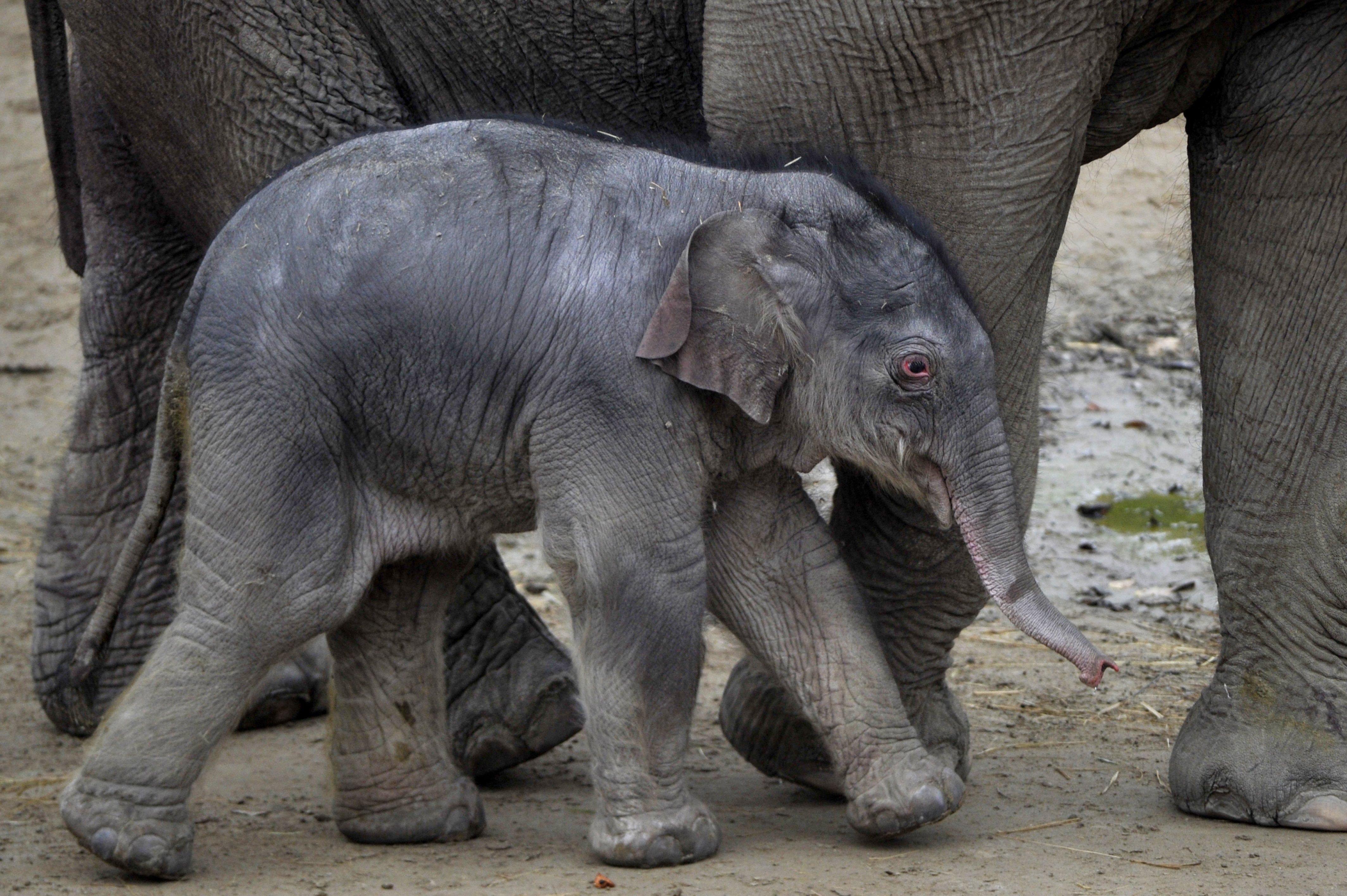 Megvan a kiselefánt neve: Arun