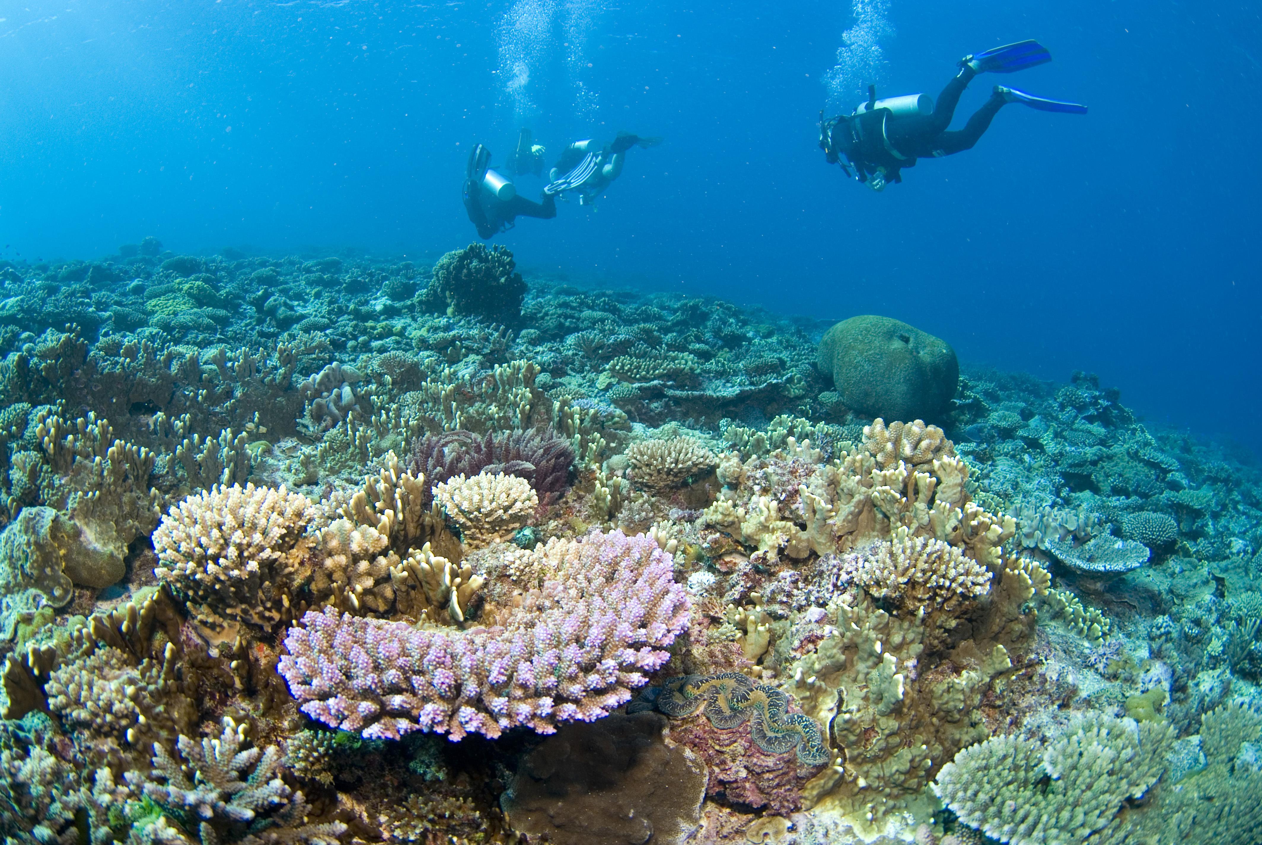 Nyert az ausztrál kormány, nem minősíti veszélyeztetettnek a Nagy-Korallzátonyt az UNESCO