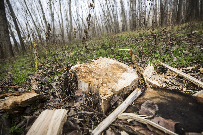 Az erdőtörvény több része is alkotmányellenes, mert elsőbbséget ad a gazdasági szempontoknak
