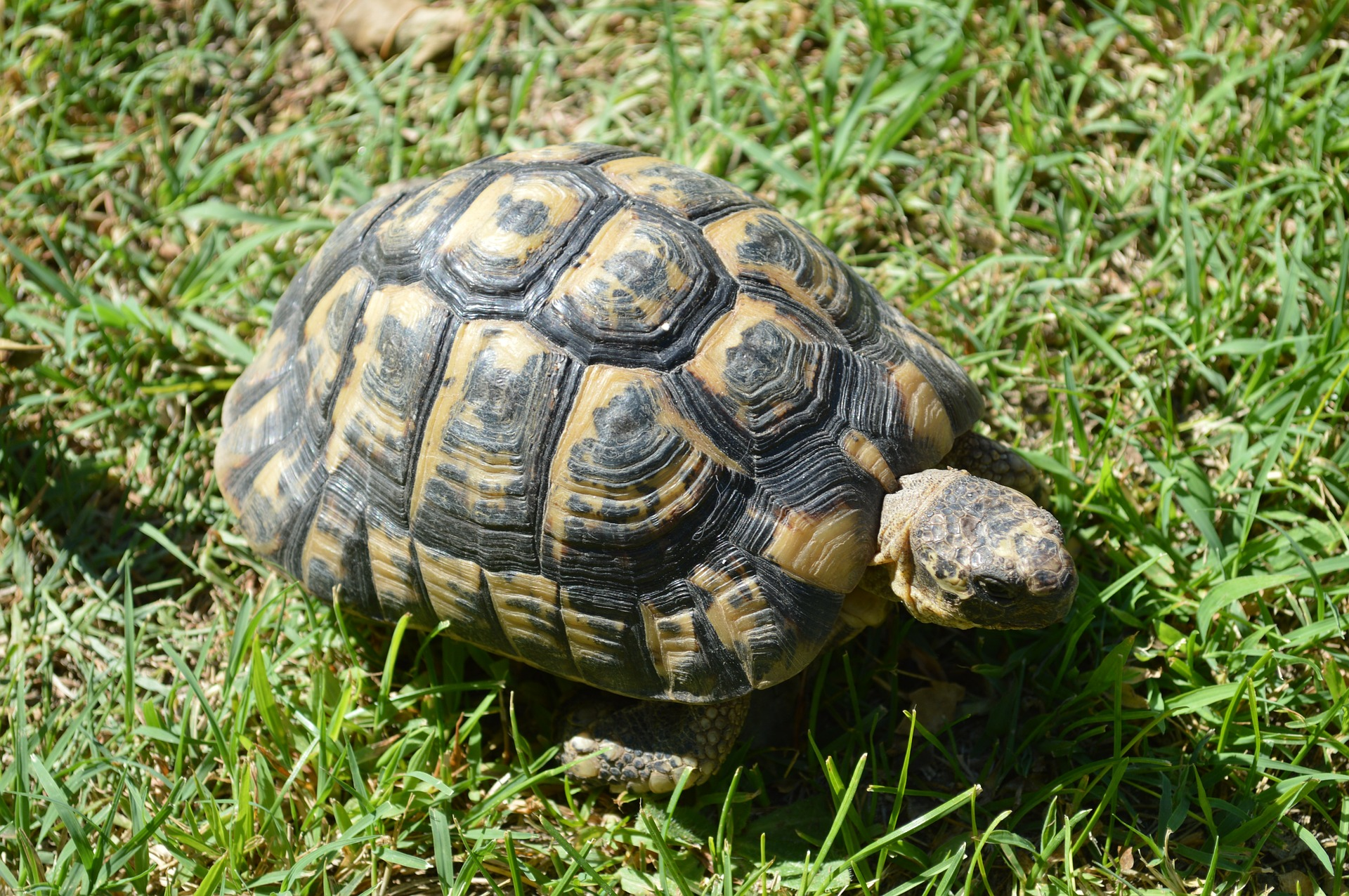 Őrizetbe vették a nőt, aki kővel verte agyon az állatkerti teknőst