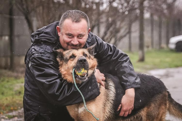 Csodálatos rendőrkutya-karriert futott Nokedli, a kis híján elaltatott német juhász