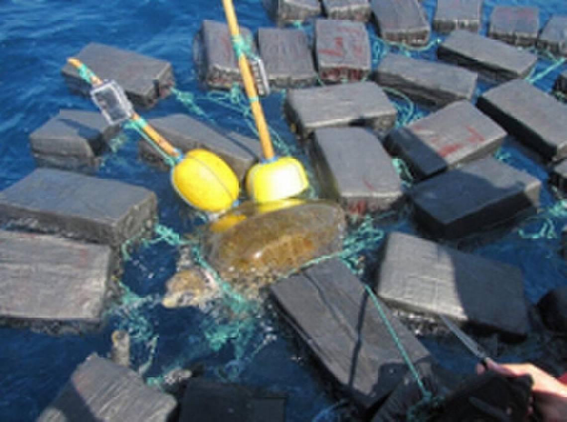 A floridai partiőrség kiszabadított egy kokainba csavarodott teknőst