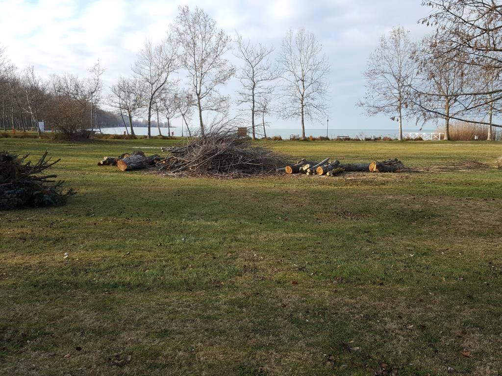 Már vágják a fákat Balatonföldváron, ahol az eddigi szabadstrand helyére épített parkolót az önkormányzat